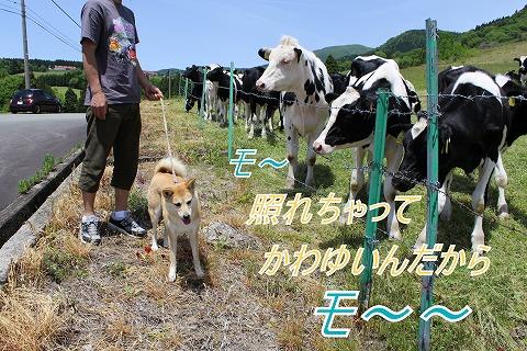 s-mo-chan140728-IMG_2646
