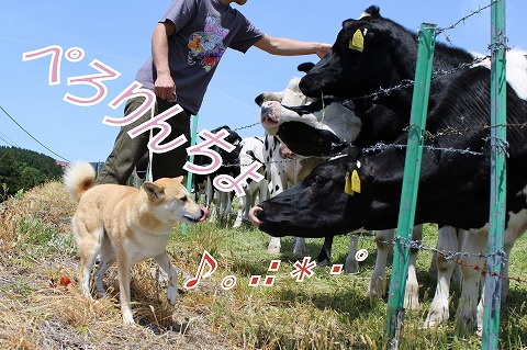 s-mo-chan140728-IMG_2661