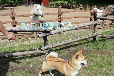 s-mo-chan140728-IMG_2741