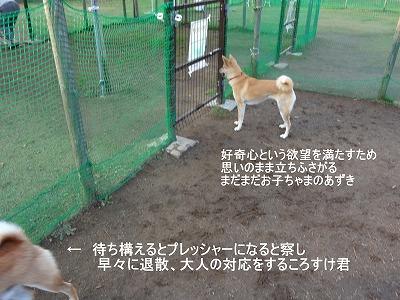 a-dog欲望