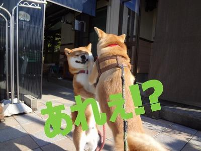a-dogあれ