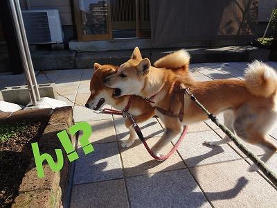 a-dogん