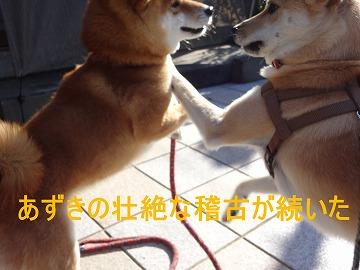 a-dog壮絶な稽古