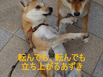 a-dog転んでも