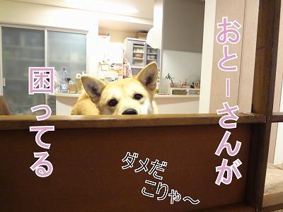 s-dogDSC01732