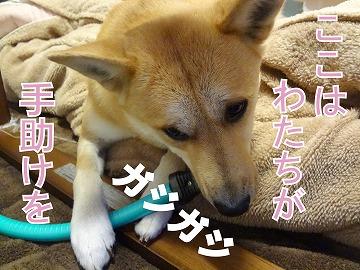 s-dogDSC01736