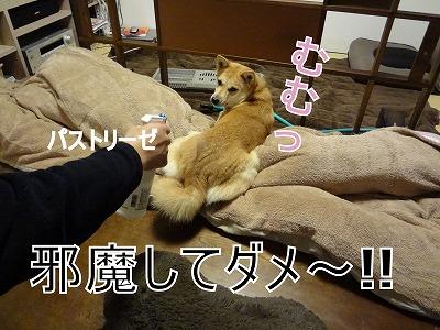 s-dogDSC01737