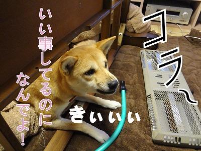 s-dogDSC01738