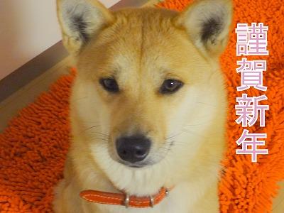 s-dogDSC01694
