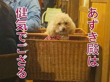 s-dogDSC05951