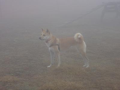 a-dogDSC00350.jpg