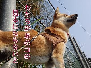 a-dogDSC00550.jpg