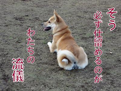 a-dogDSC00613.jpg