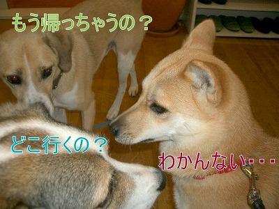 a-dogIMGP2744.jpg