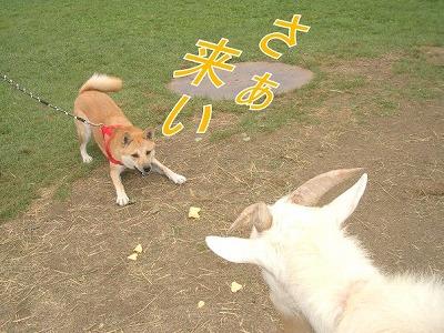 a-dogIMGP2758.jpg