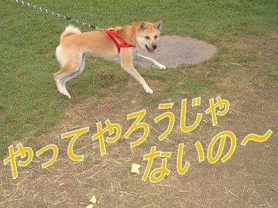 a-dogIMGP2759.jpg