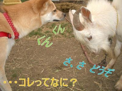 a-dogIMGP2763.jpg
