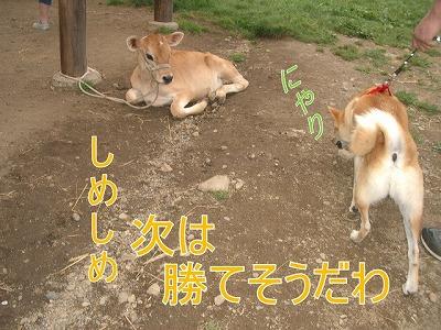 a-dogIMGP2768.jpg