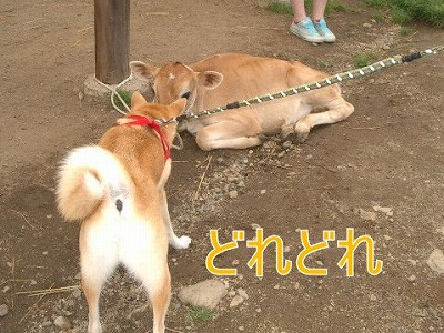 a-dogIMGP2769.jpg