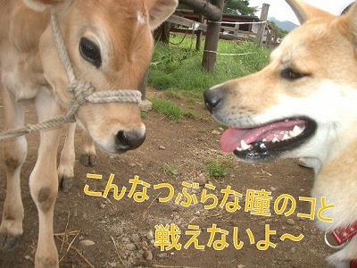 a-dogIMGP2772.jpg
