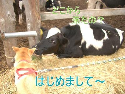 a-dogIMGP2780.jpg