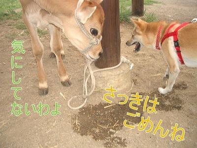 a-dogIMGP2783.jpg