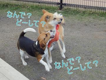 s-dogDSC00019.jpg
