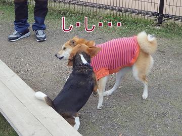 s-dogDSC00021.jpg