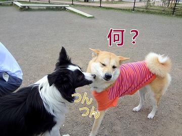 s-dogDSC00034.jpg