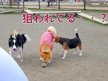 s-dogDSC00038.jpg