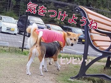 s-dogDSC00048.jpg