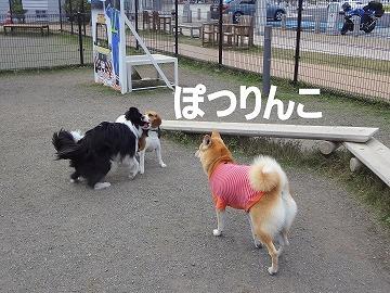 s-dogDSC00059.jpg