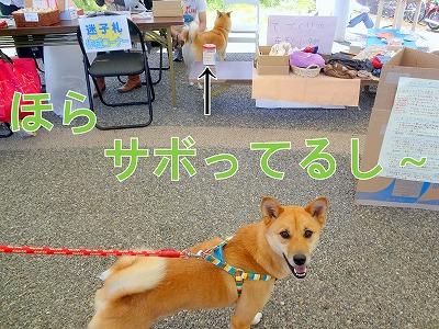s-dogDSC00884.jpg