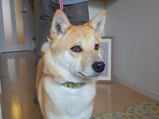 s-dogDSC05218.jpg