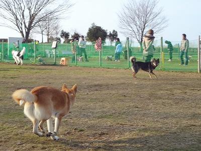 s-dogDSC05511.jpg