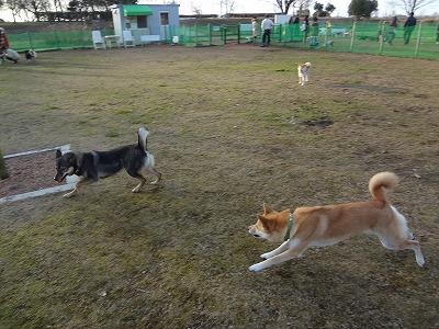 s-dogDSC05539.jpg