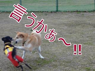 s-dogDSC06859.jpg