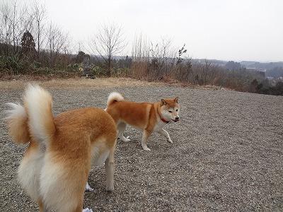 s-dogDSC07107.jpg