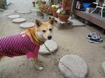 s-dogDSC09392.jpg