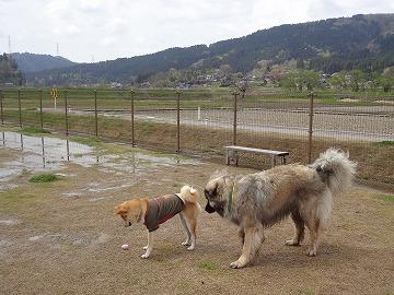 s-dogDSC09617.jpg