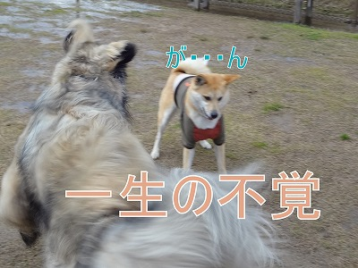 s-dogDSC09621.jpg