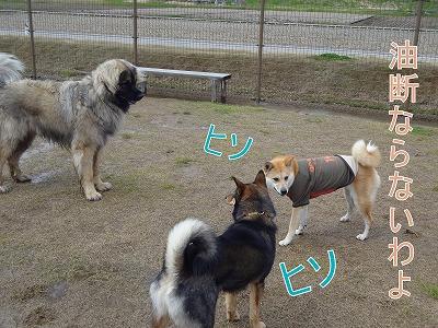 s-dogDSC09622.jpg