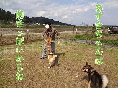 s-dogDSC09698.jpg