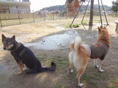 s-dogDSC09849.jpg