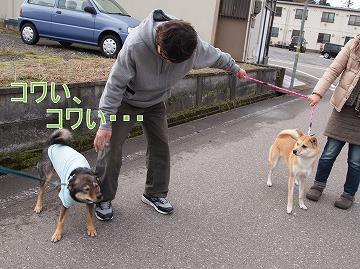 s-dogP2032879.jpg