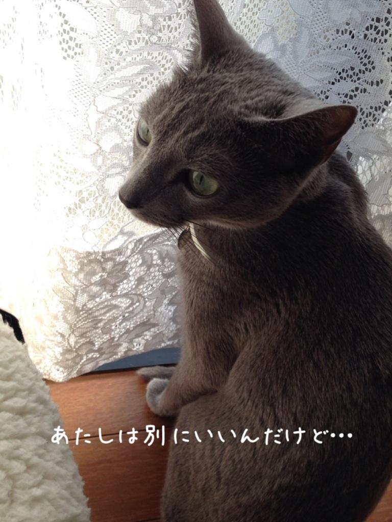 IMG_6040.jpg