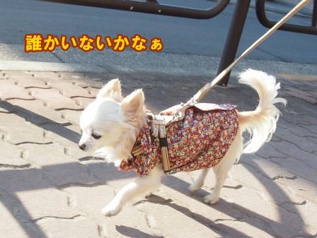 blog3488a.jpg