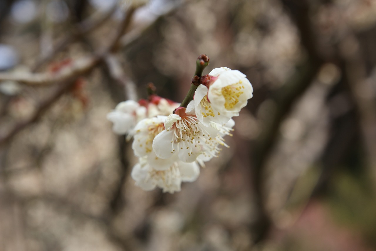 shuku-IMG_5636.jpg