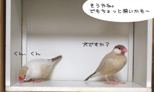 白い箱は別荘_2