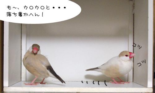 白い箱は別荘_4